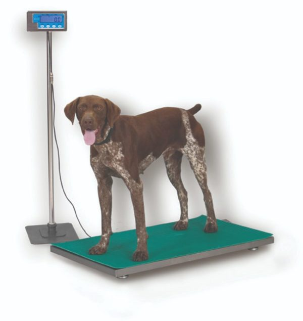 WeightTronix Floor Scale, With Stainless Steel Top